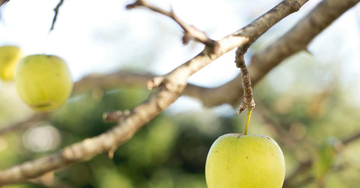 organic-snack-demand